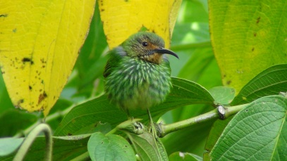 lysanne-snijders-bird1
