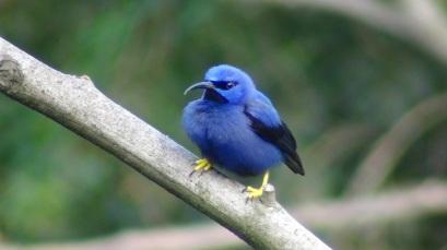 lysanne-snijders-bird2