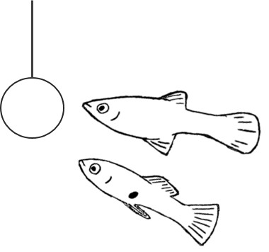Guppies_BW_Snijders