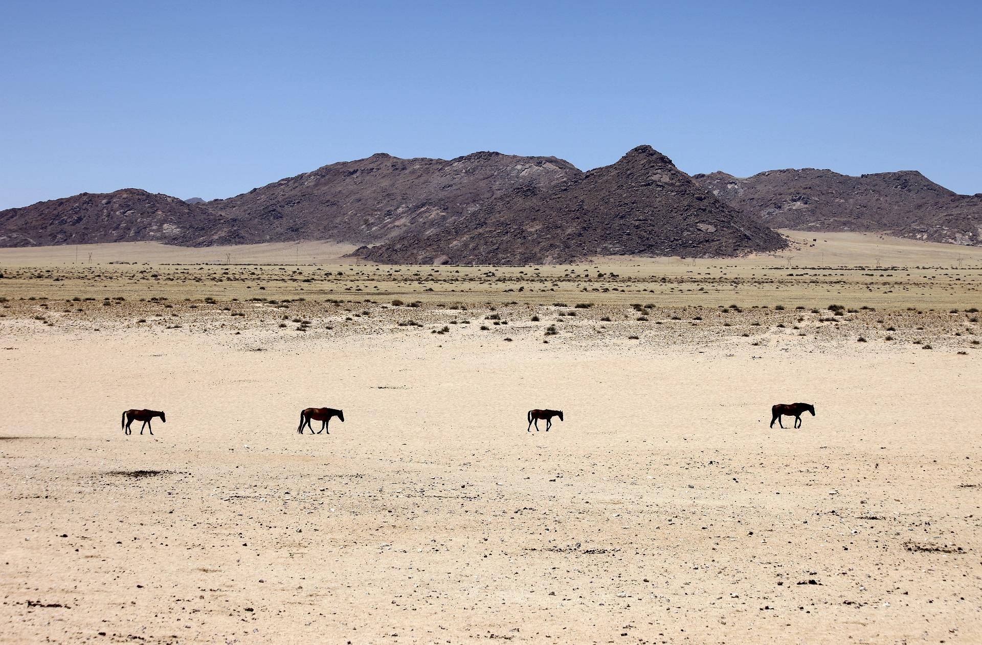 namibia-2049221_1920_PixaBay